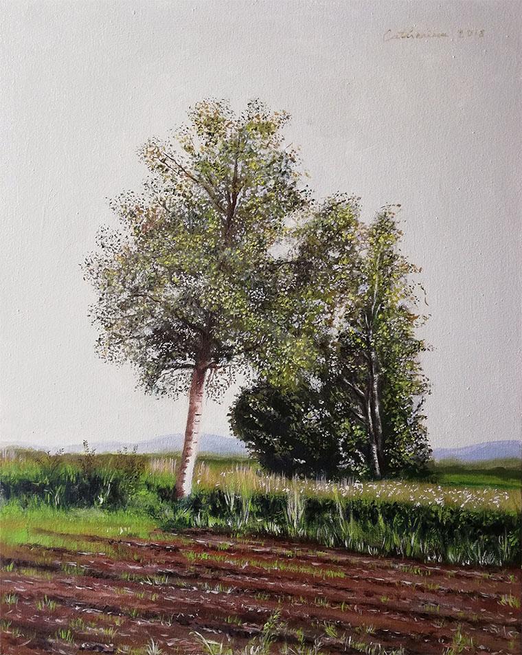 Breze v vetru/ Birches in the wind